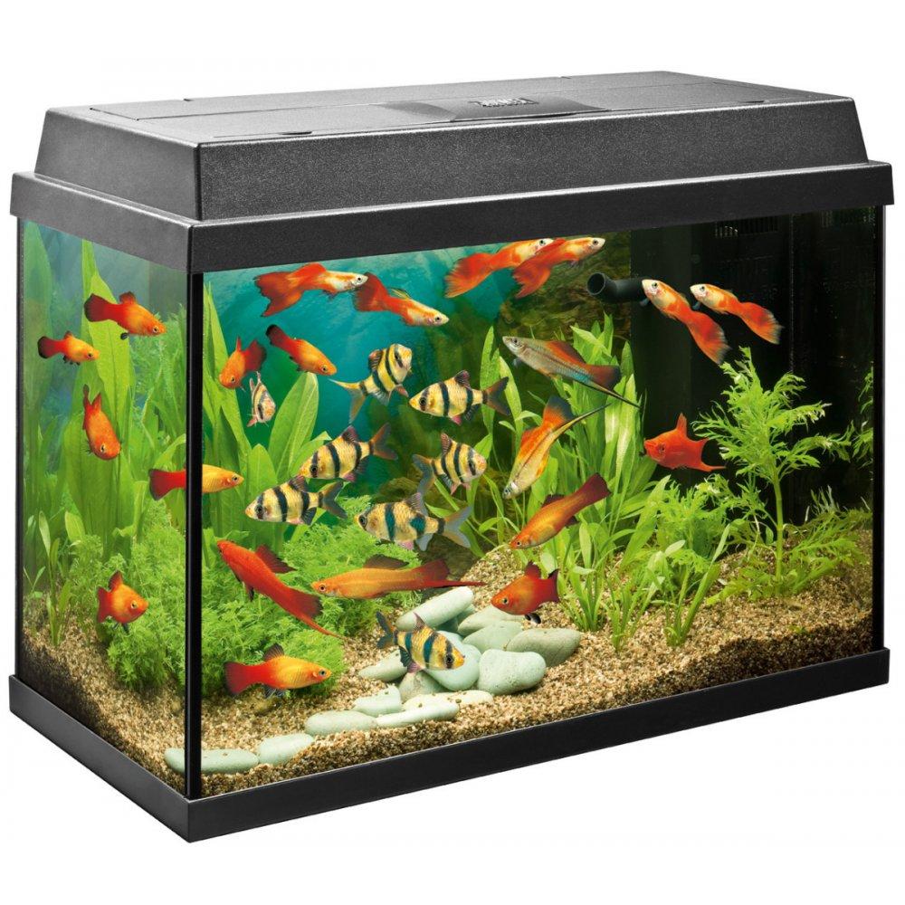 aquariums outreach team worked -