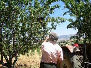 Meyve Toplama İşçisi