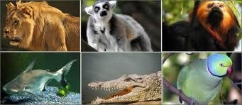 Tropik Bölge Hayvanları