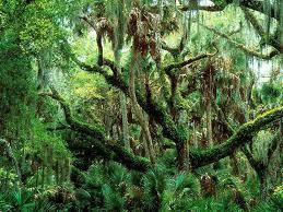 Tropik Bölgelerde Dağ ve Muson Ormanları