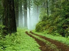Tropik Bölgelerde Yağmur Ormanları