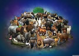 hayvanların sınıflandırılması