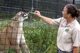 Zoologların Çalışma Alanları