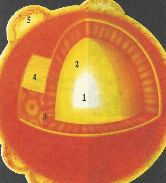 Güneşin Yapısı