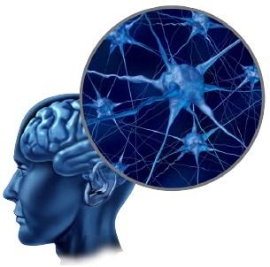 Beyindeki sinir hücrelerinin oluşturdukları ağ